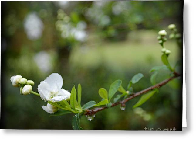 Beauty In Simple Things Greeting Card by Eva Thomas