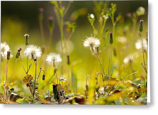 Nature Greeting Cards - Beauty In Simple Things Greeting Card by Janet Pancho Gupta