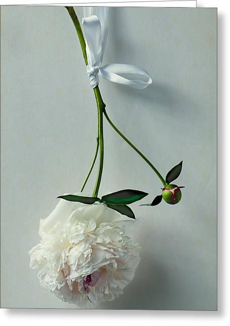 Beauty In Suspension Greeting Card by Maggie Terlecki