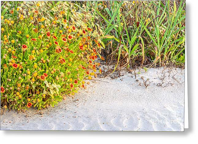 Sand Pattern Greeting Cards - Beauty in the Dunes Greeting Card by Elvis Vaughn