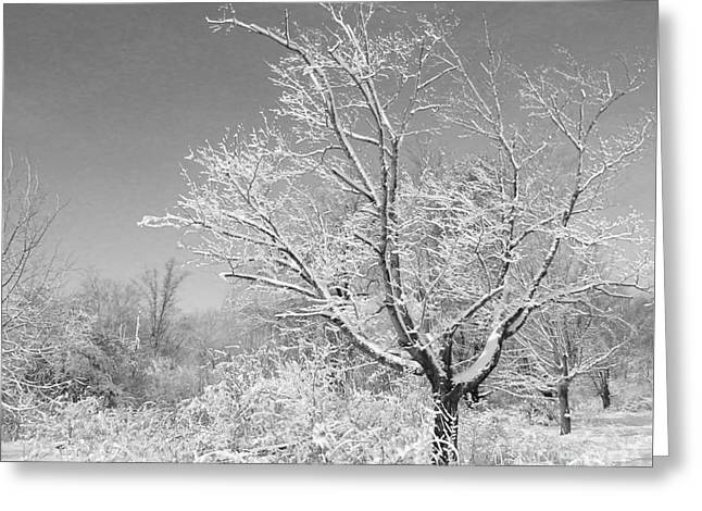 Snow Scene Landscape Greeting Cards - Beauty of Winter Greeting Card by Marcia Lee Jones