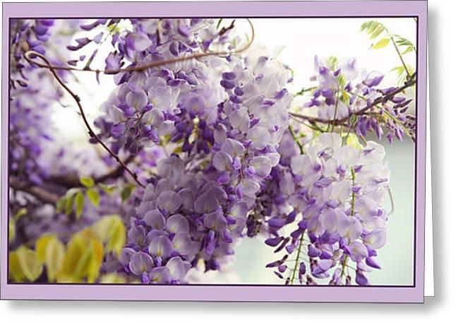 Beauty Of Wisteria. Purple. Triptych Greeting Card by Jenny Rainbow