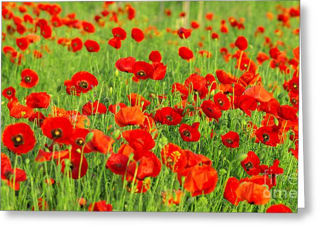 Edible Pyrography Greeting Cards - Beauty Red Poppies Greeting Card by Boon Mee
