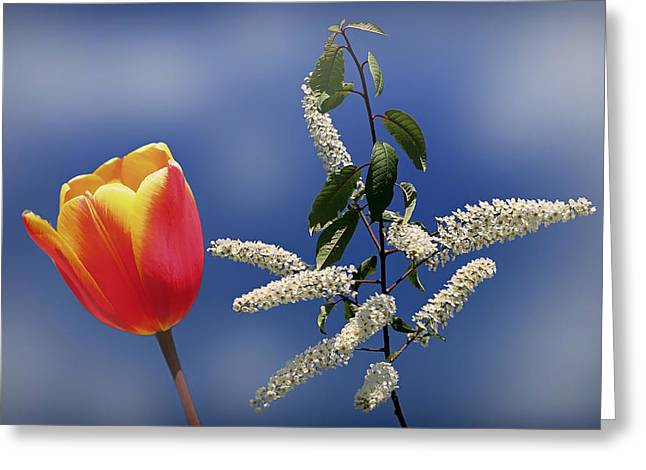 Flowers Against The Sky Greeting Cards - Beauty Unleashed Greeting Card by Peter