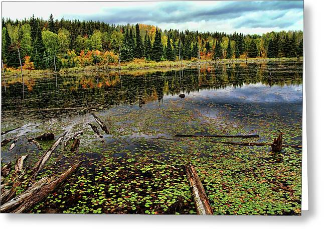 Beaver Pond Greeting Card by Bill Morgenstern