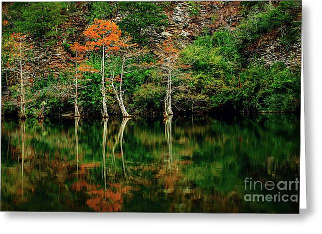 Beaver's Bend Color Explosion Greeting Card by Tamyra Ayles