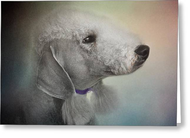 Artistic Photography Greeting Cards - Bedlington Terrier Greeting Card by Jai Johnson