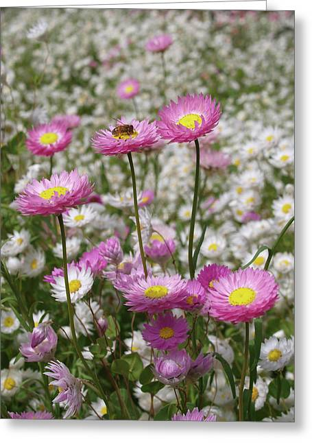 Bee And Daisy Greeting Card by Michaela Perryman