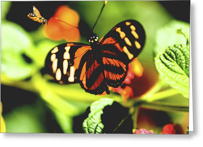 Color Enhanced Greeting Cards - Bee and the Butterfly Greeting Card by Gloria Anderson