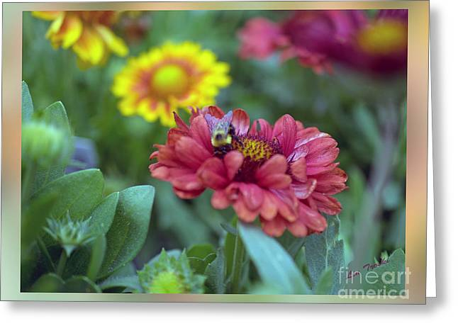 Les Fleurs Greeting Cards - Bee and the Coneflower Greeting Card by Linda Troski
