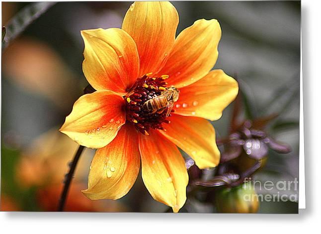 The Nature Center Greeting Cards - Bee at Work Greeting Card by Patti Whitten