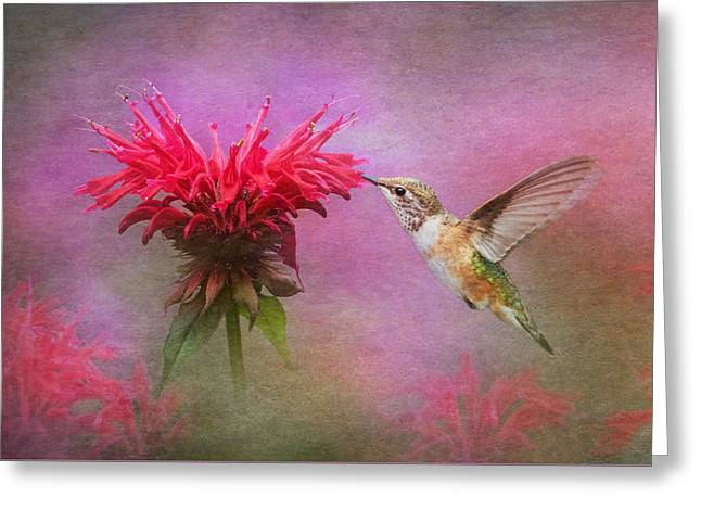 Balm Greeting Cards - Bee Balm and Hummingbird Greeting Card by Angie Vogel
