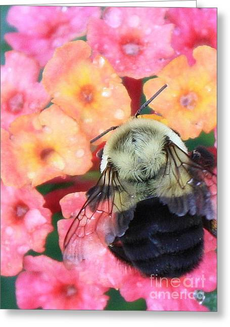 Raindrops On Flowers Greeting Cards - Bee Card Greeting Card by Carol Groenen