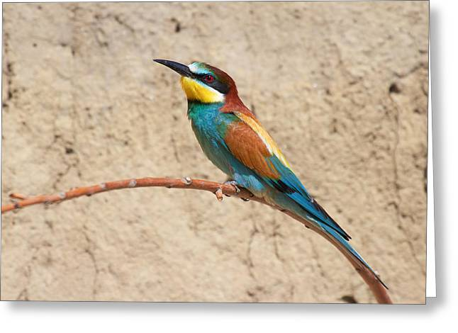 Couples Tapestries - Textiles Greeting Cards - Bee-eater Greeting Card by Marco Amenta