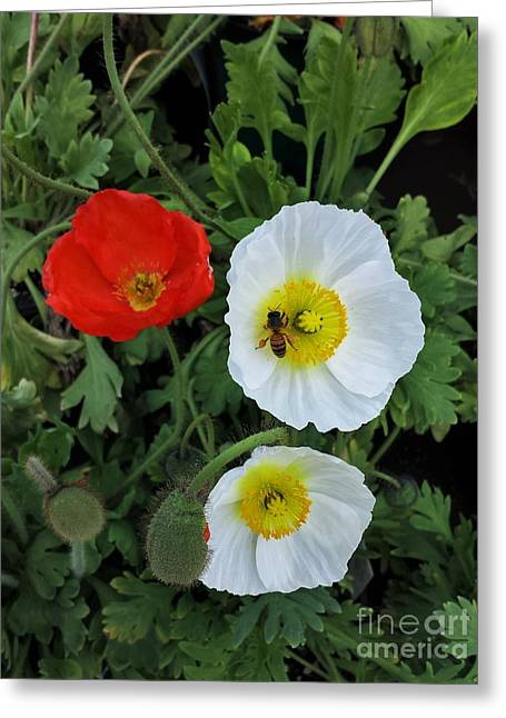 Bloosom Greeting Cards - Bee enjoy flowers Greeting Card by Jasna Gopic