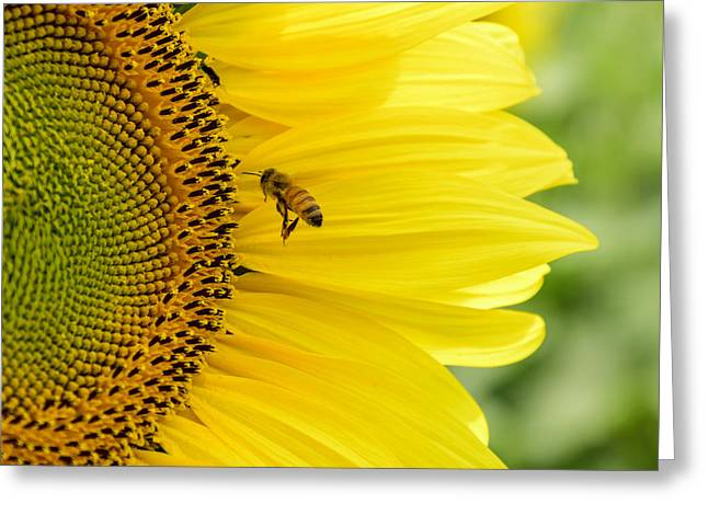 Bee Happy  Greeting Card by Steve  L'Italien