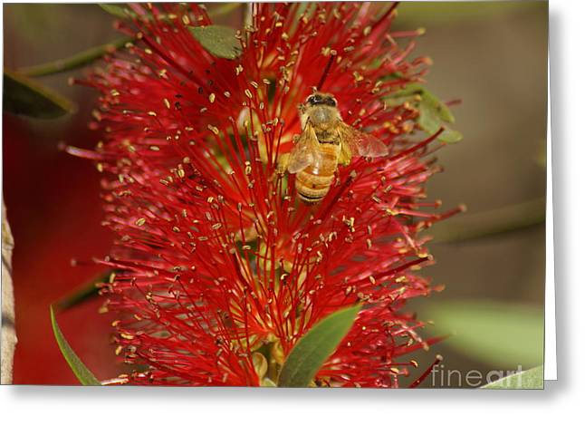 Bee Have Greeting Card by Merrin Jeff