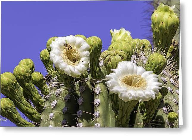 Cactus Flowers Digital Greeting Cards - Bee in a Cactus Greeting Card by George Lenz
