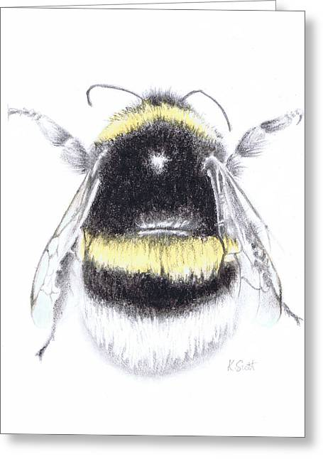 Nature Study Greeting Cards - Bee Greeting Card by Katy Scott Ricketts