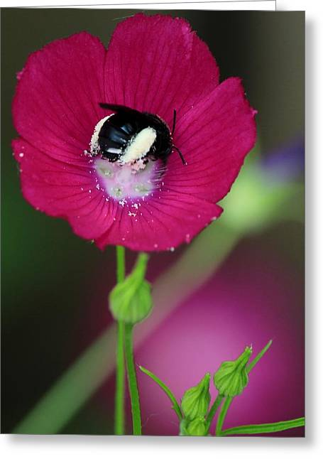 Rose Petals Greeting Cards - Bee My Guest Greeting Card by Elizabeth Sullivan