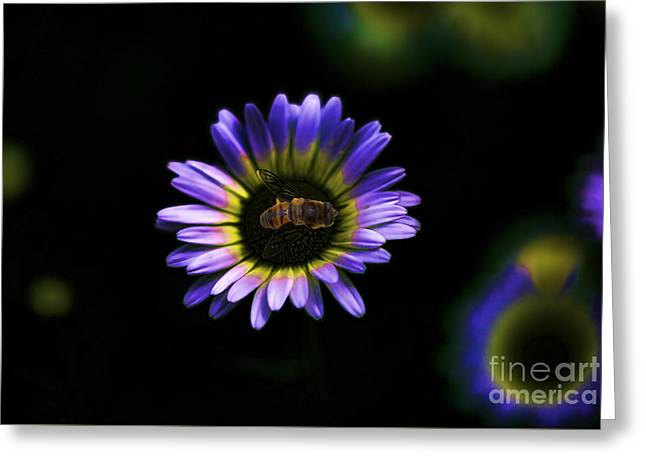 Power Plants Greeting Cards - Bee On Flower Purple Power Greeting Card by Kp Hurt