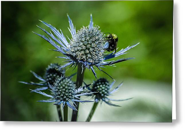 Big Sur Greeting Cards - Bee on Thistle Greeting Card by Matt Daryl Ober