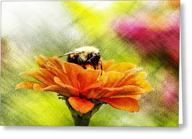 Paint Photograph Greeting Cards - Bee On Zinnia With Textures Greeting Card by Geraldine Scull
