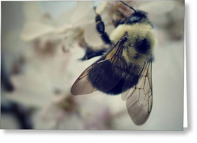 Bee Greeting Card by Sarah Coppola