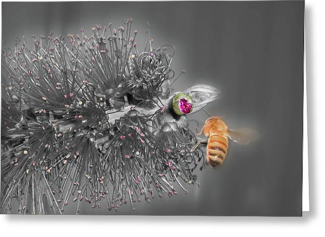 Selective Colouring Photographs Greeting Cards - Beeautiful Greeting Card by Kelly Jones