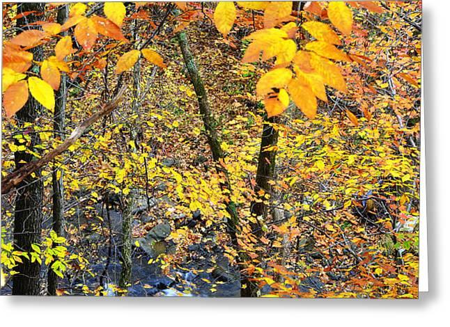 Beech Leaves Birch River Greeting Card by Thomas R Fletcher