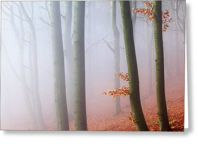 Fog Greeting Cards - Beeches Greeting Card by Martin Rak