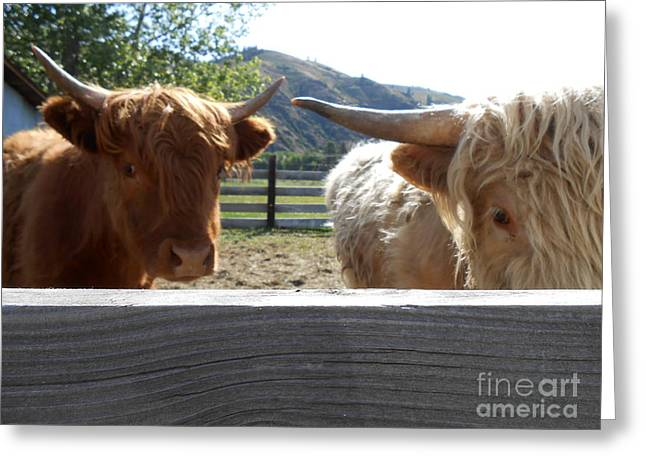 Steer Greeting Cards - Beef Steak And Beef Stew Greeting Card by LKB Art and Photography