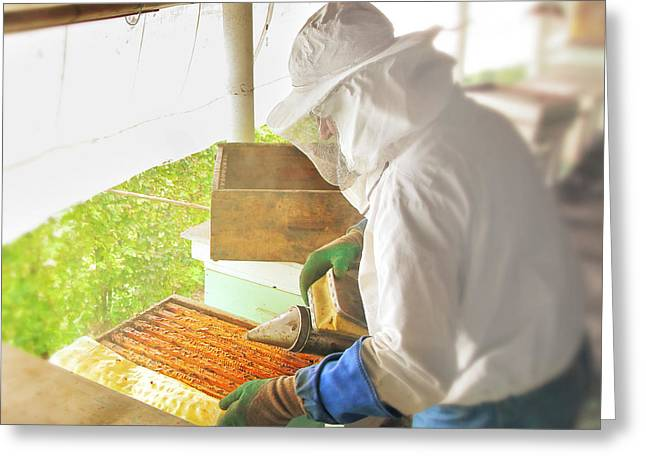 Cooperation Greeting Cards - Beekeeper harvesting honey from beehive Greeting Card by Gregory DUBUS