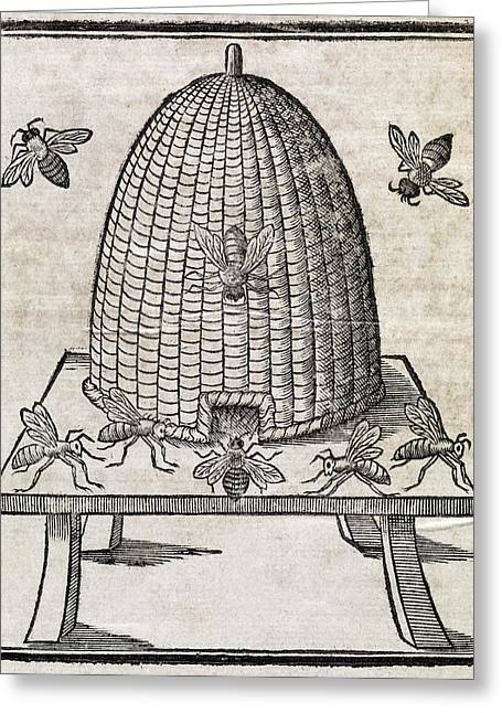Muffet Greeting Cards - Bees And Beehive, 17th Century Artwork Greeting Card by Middle Temple Library