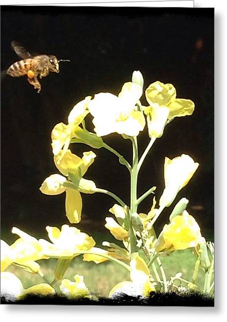 Broccoli Greeting Cards - Bees Love Broccoli Greeting Card by Daniele Smith