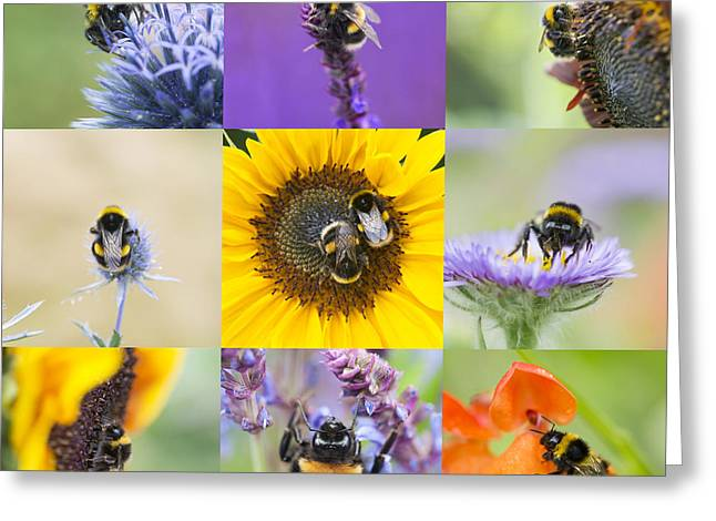Pollinator Greeting Cards - BeeTastic Greeting Card by Tim Gainey