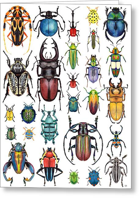 Beetle Collection Greeting Card by Kelly Jade King