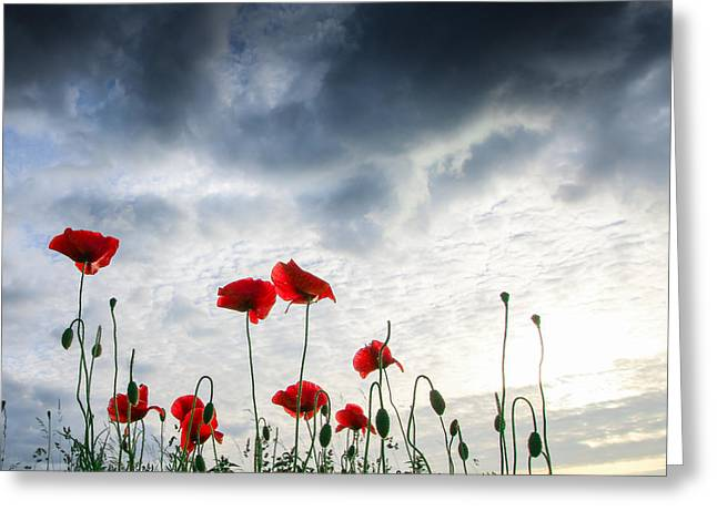 Poppy Decorations Greeting Cards - Before the Storm Greeting Card by Franziskus Pfleghart