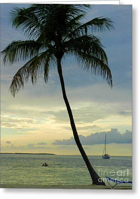 Founders Tree Greeting Cards - Before the Sunset Greeting Card by Tammy Chesney