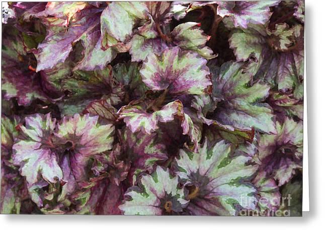 Rex Greeting Cards - Begonia Raspberry Swirl Greeting Card by Tim Gainey