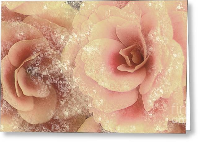 ography Digital Greeting Cards - Begonias Peachy Pink Greeting Card by Jayne Logan Intveld
