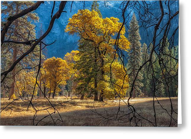 Oak Creek Greeting Cards - Behind The Branches Greeting Card by Jonathan Nguyen