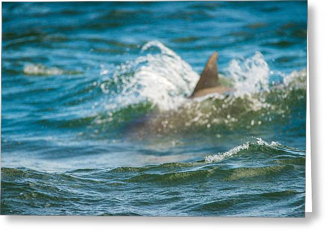 Waterlife Greeting Cards - Behind the Wave Greeting Card by Steven Santamour
