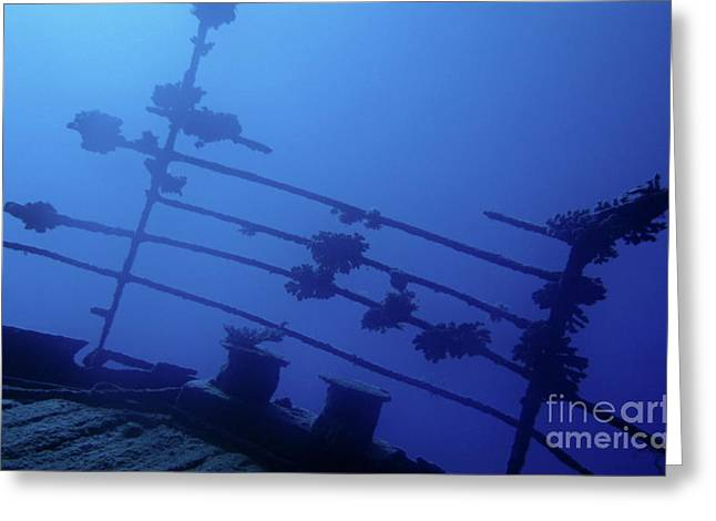 Undersea Photography Greeting Cards - Belama shipwreck Greeting Card by Sami Sarkis