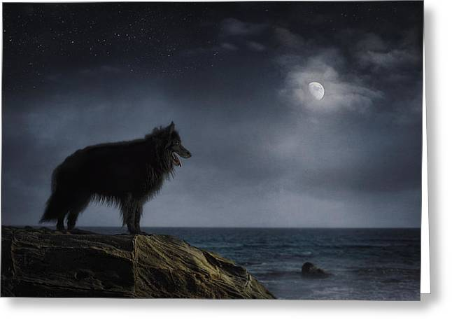 Belgian Sheepdog Art 6 Greeting Card by Wolf Shadow  Photography