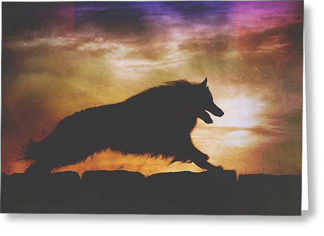 Working Dog Greeting Cards - Belgian Sheepdog Art 7 Greeting Card by Wolf Shadow  Photography
