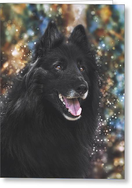 Working Dog Greeting Cards - Belgian Sheepdog Art 9 Greeting Card by Wolf Shadow  Photography