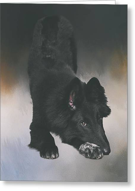 Bowing Greeting Cards - Belgian Sheepdog Puppy Art Greeting Card by Wolf Shadow  Photography