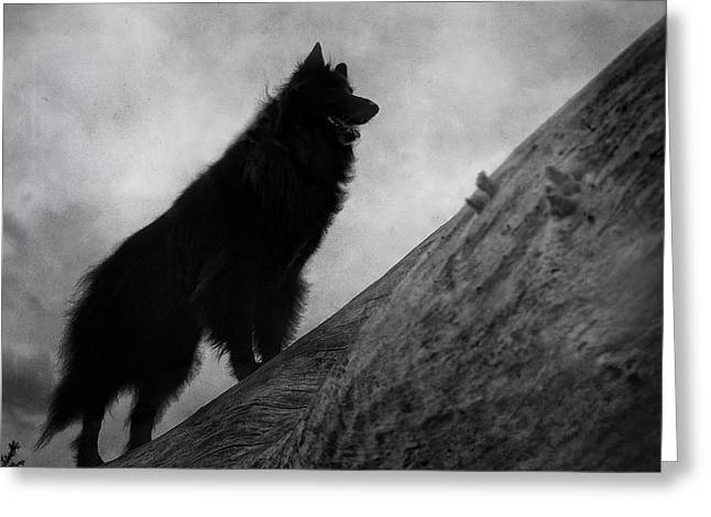 Working Dog Greeting Cards - Belgian Shepherd Artwork 8 Greeting Card by Wolf Shadow  Photography