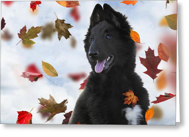 Recently Sold -  - Working Dog Greeting Cards - Belgian Shepherd Puppy In Autumn 2 Greeting Card by Wolf Shadow  Photography